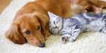 ペット禁止のアパートやマンションはどこまで不可?飼うのがバレるとどうなる?