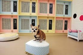 賃貸アパートで友人のペットを預かるのは規約違反?ばれにくいペットとは