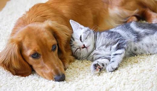 ペット禁止のアパートやマンションはどこまで不可?バレるとどうなる?