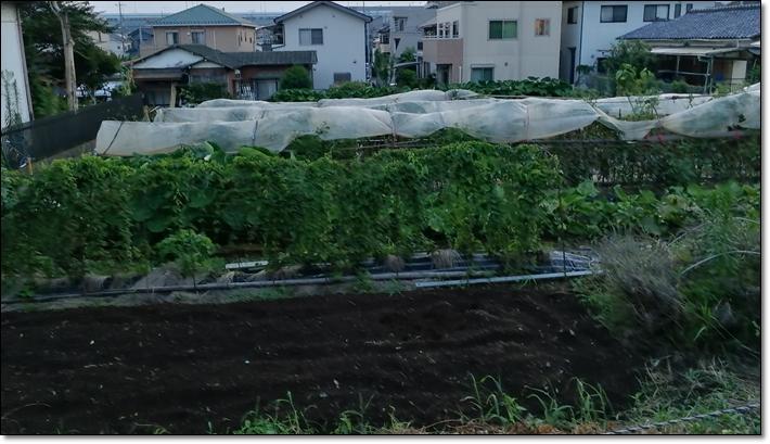 与野本町畑